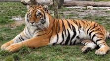 Malkia Park: Ein neues Zuhause für Großkatzen