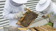 Včelári dostali rekordné dotácie