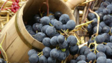 Vinári už začali spracovávať slamové víno
