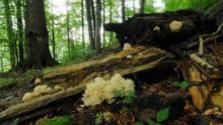 Po 12 rokoch majú Karpatské bukové pralesy presné hranice