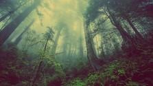 150. časť - Len v tieni bardejovských lesov si odpočiniem