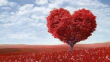 Glosa: Dá sa lásky prejesť?