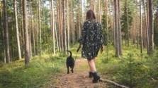 Pes a divá zver