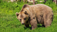 Medvede sa už zobúdzajú zo zimného spánku