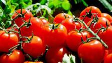 Vitamín C a lykopén v paradajkách