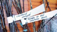 Am Anfang steht das Edelreis: Kultivierung alter Obstbaumsorten