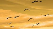 Jarná migrácia vtákov