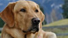 Glosa: Ťažký život chovateľov psov