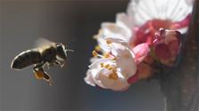 Убытки от гибели пчел в этом году превысят 3,6 млн. евро