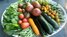 Slovak nutritionists: Being vegan has its benefits, but…