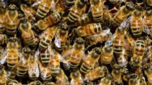 Včelári chcú spraviť celoslovenský monitoring včelstiev aúhynov
