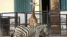 Bratislavská Zoo má 60 rokov