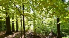 Pralesy, pamäť prírody
