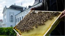 Les abeilles ont leur place importante dans la capitale slovaque
