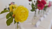 Fest der Rosen in Dolná Krupá
