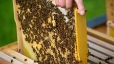 včely, med, úľ