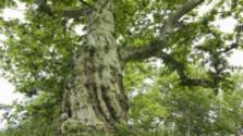 Výnimočné stromy z nášho regiónu