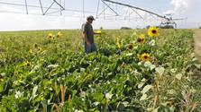 Agrosektor počas pandémie