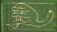Кукурузный лабиринт в Влчковцах