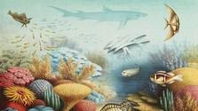 Týždeň rýb a spomienka na Ľuboša Houšku a Boženu Plocháňovú