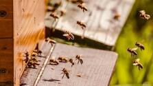 Zo zeme (s Barbarou) / Hmyz predpovedá letnú búrku