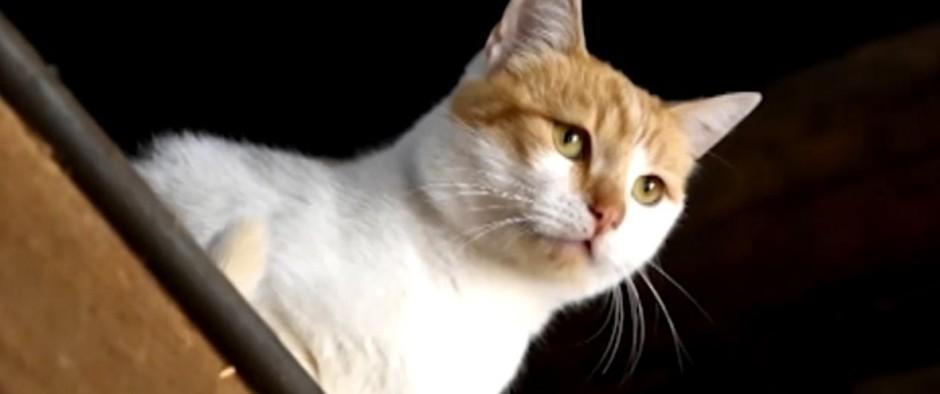 Mačacia reč tela: Ako ju správne prečítať?
