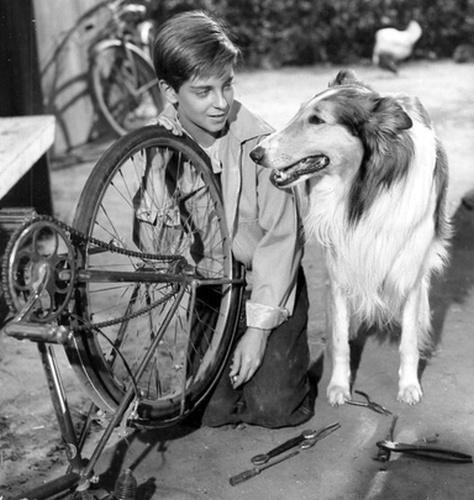lassie.clanok.jpg