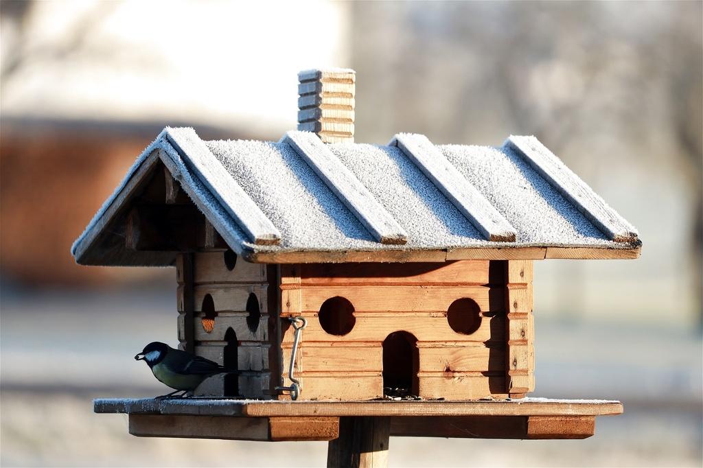 sýkorka v kŕmidle pre vtáky