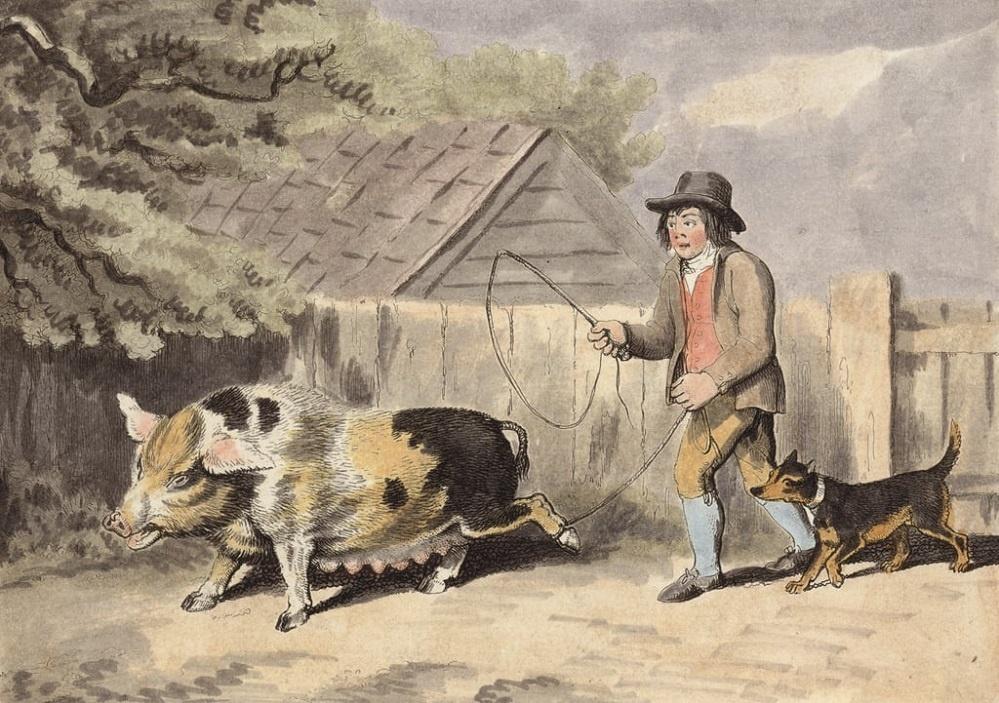 pastier svin mensi.jpg